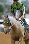 May 18, 2013, Hello Lover (#9), trained by Robert Reid, John Bisono up, wins race 2, the Deputed Testamony Starter Allowance at Pimlico Race Course in Baltimore, MD.  (Joan Fairman Kanes/Eclipse Sportswire)