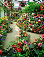 Greenhouse flowers. Butchart Gardens. Victoria, British Columbia, Canada.