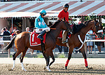 Thewayiam in the Post Parade for the Lake Placid Stakes  (Grade 2) Aug. 18, 2018 at the Saratoga Race Course, Saratoga Springs, NY.   (Bruce Dudek/Eclipse Sportswire)