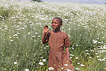 Young Girl In Field Of Daisies