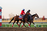 November 3, 2020: Lady Prancealot, trained by trainer Richard Baltas, exercises in preparation for the Breeders' Cup Filly & Mare Turf at Keeneland Racetrack in Lexington, Kentucky on November 3, 2020. Gabriella Audi/Eclipse Sportswire/Breeder's Cup/CSM