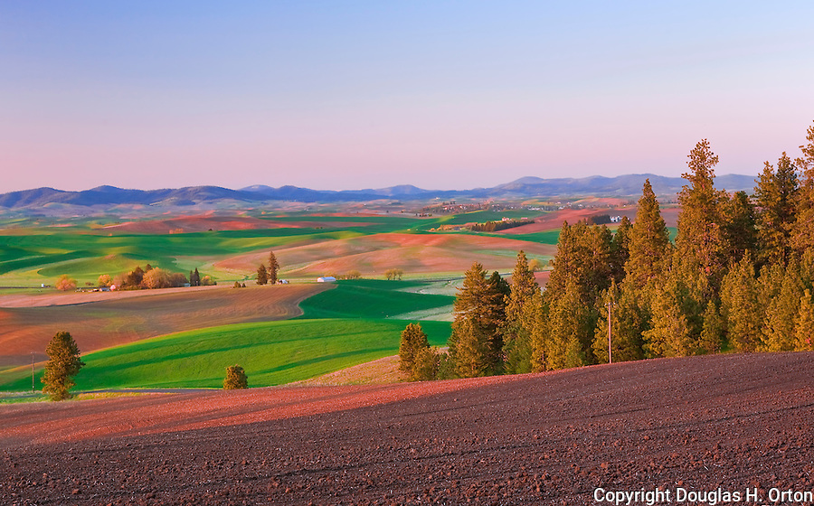 Evening falls on the Palouse Hills, Washington, known as the heart of wheat farming in the United States is also famous for its rolling scenery.  This landscape is at the base of Kamiak Butte, a Whitman County Park offering camping, picknicking, hiking, and incredible views of both Idaho and Washington Palouse country.