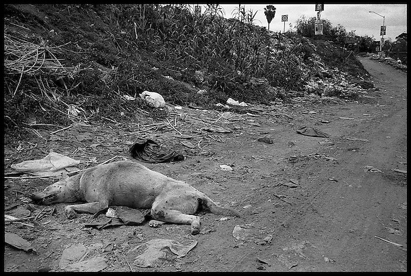 A dog lies dead at the bank of the river Atoyac that runs along the western edge of the city of Oaxaca. Once a large river, now, due to soil erosion from logging on its banks, the river is but a 2ft. deep trickle for half the year and empty the other half. Even when water is present, it is too polluted from sewage and industrial pollution to be usable for the city's water shoratge issues......
