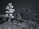 Century Plant and Lee Mountain (Infrared)