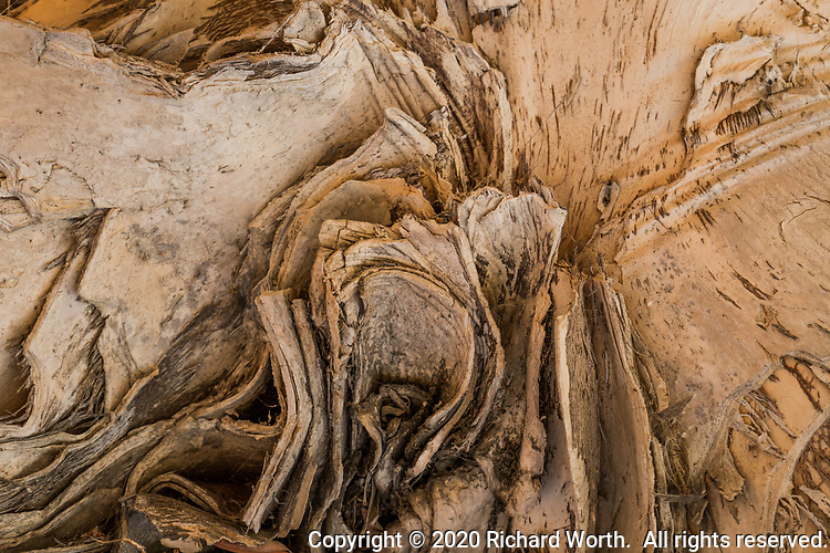 Curling, swirling - a close-up detail of a tree in a neighborhood park gives the appearance of motion while having been perfectly still for months or years or even decades. Very slow motion.