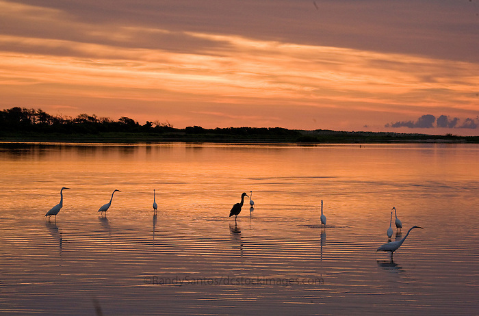 13 Reasons To Visit Chincoteague Island, The Happiest