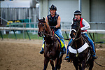 LOUISVILLE, KY - MAY 03: Lone Sailor, trained by Tom Amoss, exercises in preparation for the Kentucky Derby at Churchill Downs on May 3, 2018 in Louisville, Kentucky. (Photo by John Vorhees/Eclipse Sportswire/Getty Images)