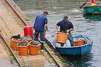 Europe/France/Normandie/Basse-Normandie/50/Manche/Presqu'île de la Hague/Goury:  Le Port- Retour de pêche