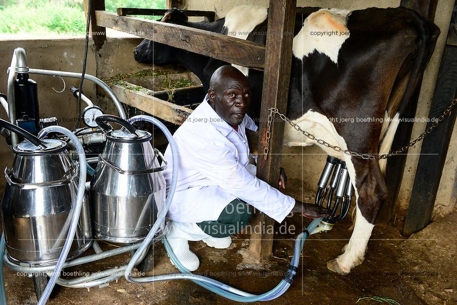 KENIA, County Kakamega, Bukura, ATDC Agricultural Technology Development Center, dairy farm, milking with machine / Milchviehhaltung, Melken mit Melkmaschine