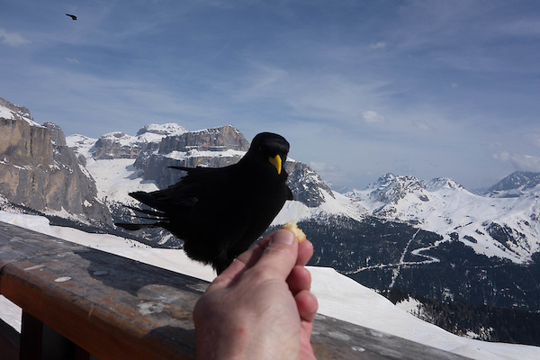 Top of Col Rodella, Canazei, Dolomites, Italy,