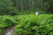 A hiker surrounded by ferns during the early summer months along the Skookumchuck Trail in the White Mountains, New Hampshire.