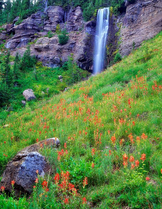 Crooked Creek Falls and Indian Paintbrush. Bird Creek Meadows, Washington.