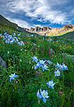 San Juan Mountains, CO<br /> American Basin with Colorado columbine (Aquilegia coerulea), paintbrush (Castilleja rhexifolia), and sneezeweed (Dugaldia hoopesii) and other wildflowers in meadows beneath Handies Peak