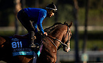 OCT 29: Breeders' Cup Juvenile Turf entrant Graceful Kitten, trained by Amador Merei Sanchez,  gallops at Santa Anita Park in Arcadia, California on Oct 29, 2019. Evers/Eclipse Sportswire/Breeders' Cup