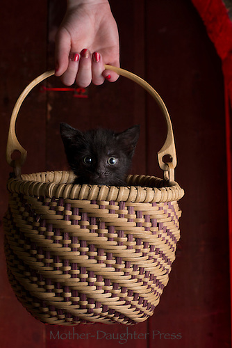 """""""Where am I going and why am I in this handbasket?"""" Puzzled foster kitten, Yarmouth Maine, USA"""