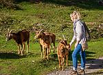 Deutschland, Bayern, Chiemgau, Achental, Bergsteierdorf Schleching: auf Wanderwegen um Schleching herum kann man (Frau) auch freilaufenden Ziegen begegnen | Germany, Upper Bavaria, Achen Valley, mountaineer villagae Schleching: encounter with loose goats on hiking trail