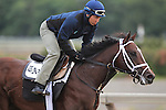 June 5, 2015: Belmont Stakes contender Materiality, trained by Todd Pletcher, gallops at Belmont Park, Elmont, NY. Joan Fairman Kanes/ESW/CSM