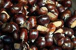 Italy, Alto Adige - Trentino (South Tyrol), Community Appiano sulla Strada del Vino: chestnuts | Italien, Suedtirol, bei Bozen, Gemeinde Eppan: Maronen, Esskastanien
