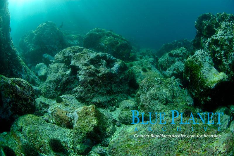 Barren rocky area. South Harbour. Poor Knights Islands. New Zealand. South Pacific Ocean