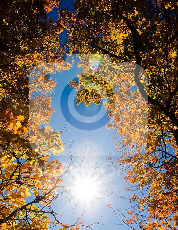 12.10.2010, Kaprun und Umgebung, AUT, Herbstfeatures, im Bild ein Baum mit Blättern in Herbstfarben, EXPA Pictures © 2010, PhotoCredit: EXPA/ J. Feichter