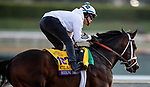 OCT 24: Breeders' Cup Classic entrant Seeking the Soul, trained by Dallas Stewart, gallops at Santa Anita Park in Arcadia, California on Oct 24, 2019. Evers/Eclipse Sportswire/Breeders' Cup