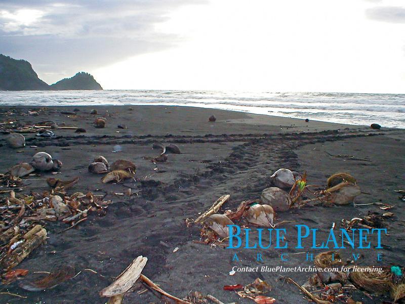 tracks of nesting sea turtles on beach, Dominica, Caribbean, Atlantic