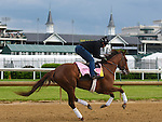 LOUISVILLE, KY - MAY 04: Land Over Sea, trained by Doug O'Neill, exercises and prepares during morning workouts for the Kentucky Derby and Kentucky Oaks at Churchill Downs on May 4, 2016 in Louisville, Kentucky.(Photo by Samantha Bussanch/Eclipse Sportswire/Getty Images)