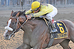 Union Rags (no. 6), ridden by Javier Castellano and trained by Michael Matz, wins the  140th running of the grade 1 Champagne Stakes for two year olds on October 08, 2011 at Belmont Park in Elmont, New York.  (Bob Mayberger/Eclipse Sportswire)
