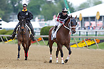 May 17, 2014.Happy My Way, Joe Bravo up, take part in the post parade before winning the Grade III Maryland Sprint Handicap at Pimlico Race Course in Baltimore, MD. ©Joan Fairman Kanes/ESW/CSM