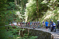 an elite escape group of 20+ riders riding through the woods of the Col de Portet-d'Aspet<br /> <br /> stage 12: Lannemezan - Plateau de Beille (195km)<br /> 2015 Tour de France