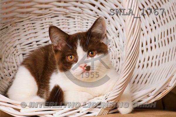 Carl, ANIMALS, photos, kitten, white basket(SWLA1767,#A#) Katzen, gatos