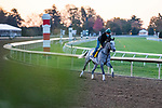 November 3, 2020: Tacitus, trained by trainer William I. Mott, exercises in preparation for the Breeders' Cup Classic at Keeneland Racetrack in Lexington, Kentucky on November 3, 2020. Gabriella Audi/Eclipse Sportswire/Breeder's Cup/CSM