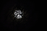 Like a fly in a spider's web, the Full Cold Moon shines through the bare tangled branches of a tree on a cold December night, the night of the Winter Solstice.