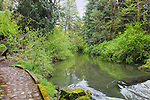 """Cobblestone path by river with stone wall in deep forest.  """"Portland's Secret Garden"""",  Leach Garden was established by JOhn and Lilla Leach in the 1930's.  The Garden continues as a public place of respite and native northewest botanical display.  Operated by the city of Portland, Oregon.."""