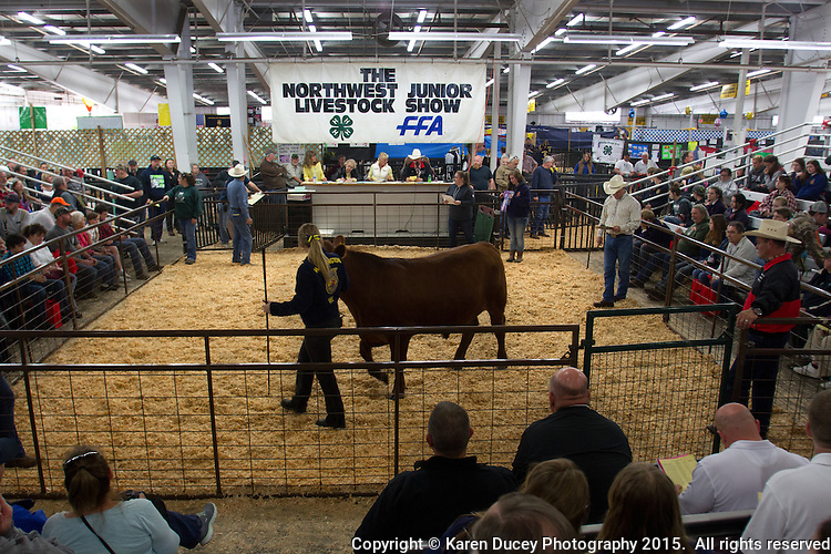 Fife High School chapter FFA student Kasey Asplund, 18 from Milton, Wash. shows her steer, Charley, in the auction ring on the final day of the Northwest Junior Livestock Show at the Washington State Spring Fair in Puyallup, Wash. on April 19, 2015.  (photo © Karen Ducey Photography)