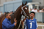 HOT SPRINGS, AR - April 14: Terra Promessa #1 walks to the paddock prior to the Apple Blossom Handicap at Oaklawn Park on April 14, 2017 in Hot Springs, AR. (Photo by Ciara Bowen/Eclipse Sportswire/Getty Images)