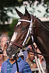 Rachel Alexandra enters the paddock for the Mother Goose at Belmont Park 6/27/09.