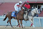 January 22, 2021: Cowan (3) with jockey Ricardo Santana, Jr. aboard before the Smarty Jones Stakes at Oaklawn Racing Casino Resort in Hot Springs, Arkansas on January 22, 2021. Justin Manning/Eclipse Sportswire/CSM