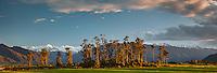 Sunset over farmland in Whataroa with kahikatea trees and Southern Alps, West Coast, South Westland, New Zealand