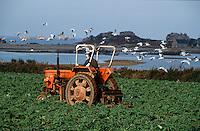 Europe/France/Bretagne/22/Côtes d'Armor/Circuit de la côte des Ajoncs/Env de Bugueles: Tracteur dans les champs