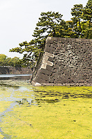 A moat covered with green algae outside the Imperial Palace in Tokyo.