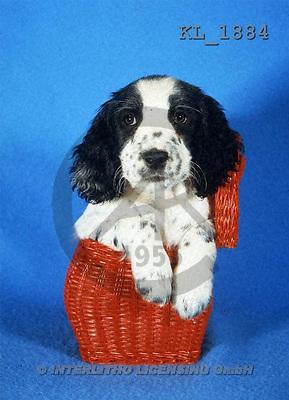Interlitho, ANIMALS, dogs, photos, dog, red basket(KL1884,#A#) Hunde, perros