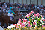 9 April 2010: Full grandstands and dogwoods at Oaklawn in Hot Springs, Arkansas