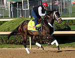 April 20, 2014 Ride On Curlin, trained by William G. Gowan and owned by Daniel J. Dougherty, gallops at Churchill Downs.  He was recently second in the Arkansas Derby at Oaklawn Park.