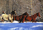"""Horses in Winter Holiday Card<br /> Inside message: Season's Greetings.<br /> 5 x 7"""" holiday card with white envelope.<br /> Printed on recycled paper with soy based inks. Watermark does not appear on product."""