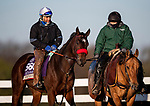 November 2, 2020: Venetian Harbor, trained by trainer Richard Baltas, exercises in preparation for the Breeders' Cup Filly & Mare Sprint at Keeneland Racetrack in Lexington, Kentucky on November 2, 2020. Alex Evers/Eclipse Sportswire/Breeders Cup