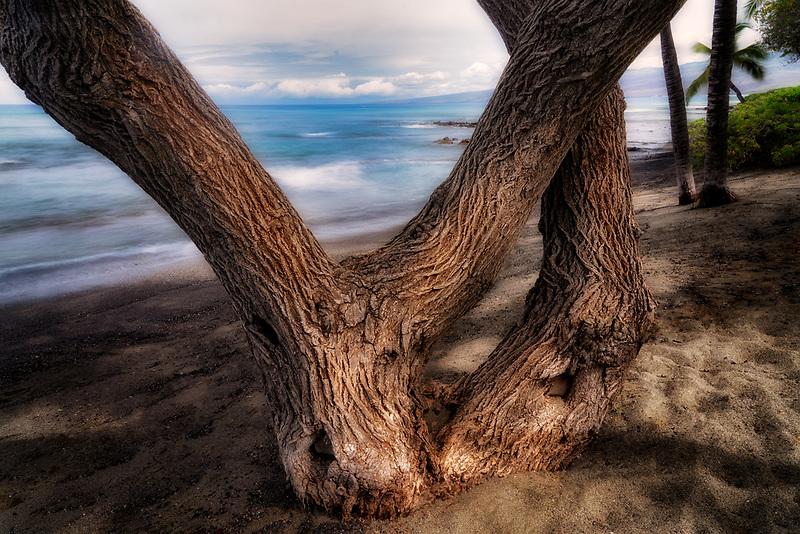 Tree trunks and ocean. Along the Kohala coast. Hawaii, the big island.
