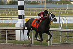 Cairo Prince with jockey Luis Saez on board wins the Holy Bull Stakes G2 at  Gulfstream Park, Hallandale Beach, Florida 01-25-2014