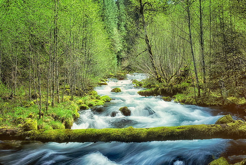 Roaring River with new Spring growth. Oregon.