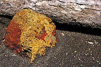 Rock lying near a dead trunk on the ash of Yasur volcano, Tanna Island, Vanuatu